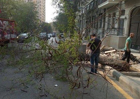 Bakıda güclü külək fəsadlar törətdi - VİDEO