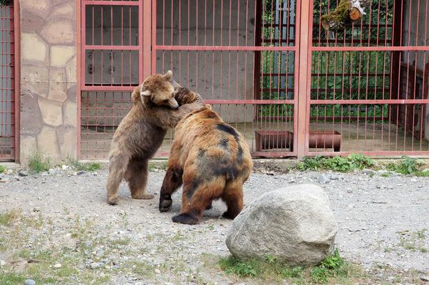 Zoopark rəhbərliyi heyvanları qidadan və qayğıdan məhrum etdi